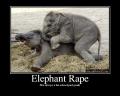 elephantrape